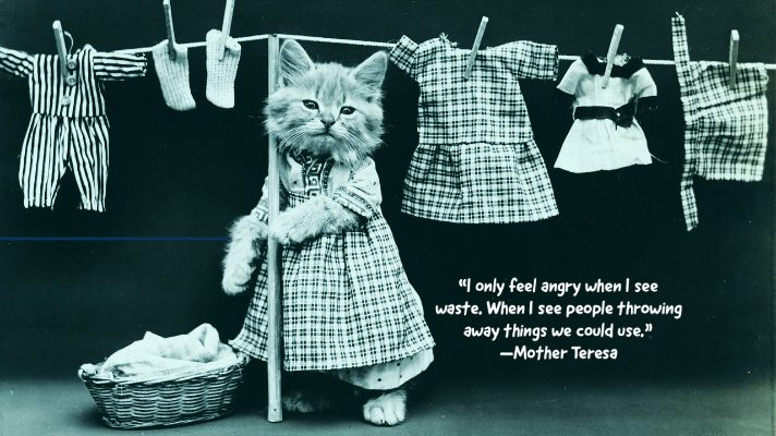 Cat in dress standing next to clothes on a clothes line, zero panik textile recycling collection